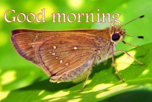 Butterfly Good Morning Wishes Images Pictures Download