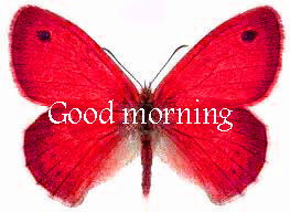 Butterfly Good Morning Wishes Images photo Pics Download