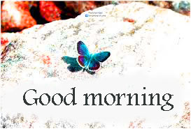 Butterfly Good Morning Wishes Images Download