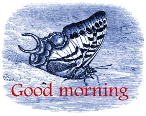 Butterfly Good Morning Wishes Images Photo Download