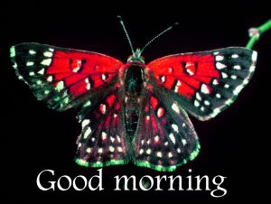 Butterfly Good Morning Wishes Images Pics HD Download