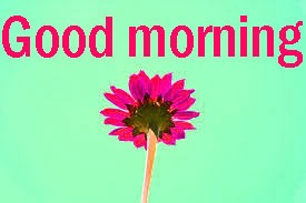 Good Morning Images Pics HD Download With Flower