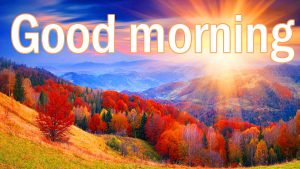 Good Morning Images Pictures Wallpaper Download