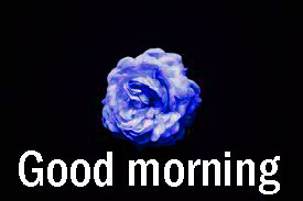 Good Morning Images Download With Rose