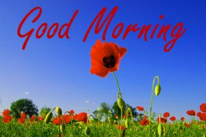 Gud Morning Images Wallpaper Pics Download
