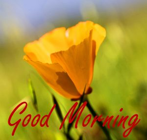 Gud Morning Images Photo HD Download