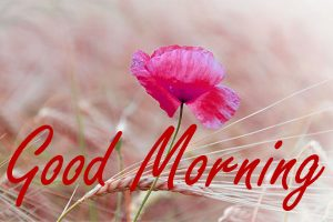 Gud Morning Images Pictures Free Download