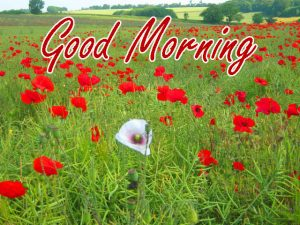 Gud Morning Images Photo Free Download