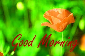 Gud Morning Images Photo Download