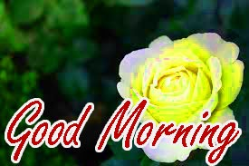 Gud Morning Wishes Images Wallpaper Pics