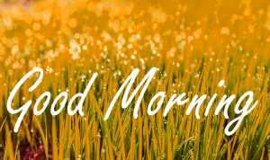 Gud Morning Wishes Images Wallpaper Pics HD