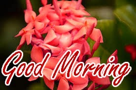 Gud Morning Wishes Images Photo HD