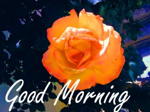 Gud Morning Wishes Images Wallpaper With Flower