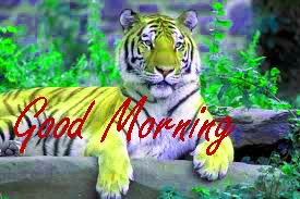Gud Morning Wishes Images Wallpaper Pics Free Download