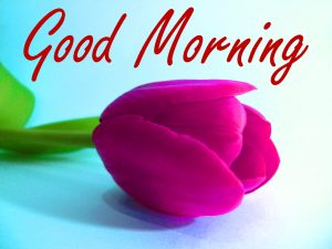 Gud Morning Wishes Images Photo HD Download
