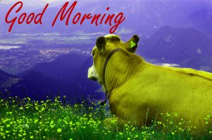 Gud / Gd mrng Morning Wishes Images Wallpaper Pics