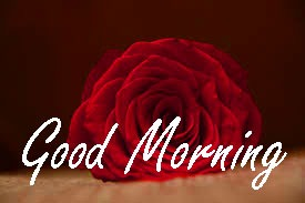 Gud / Gd mrng Morning Wishes Images Pictures Download