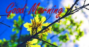 Gud / Gd mrng Morning Wishes Images Wallpaper Pics Download