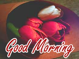 Gud / Gd mrng Morning Wishes Images Wallpaper With Red Flower