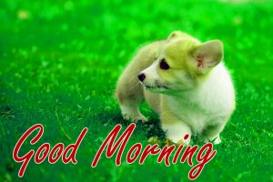 Gud / Gd mrng Morning Wishes Images Pictures Free Download