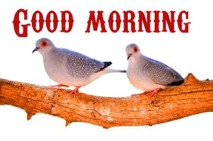 Good Morning Wishes Images Wallpaper Pictures HD for Whatsapp