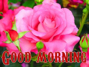 Good Morning Wishes Images Wallpaper Download for Whatsapp