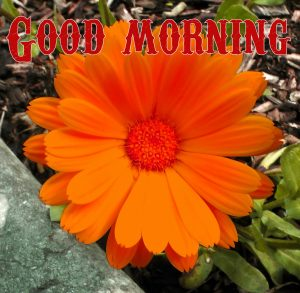 Good Morning Wishes Images Photo HD for Whatsapp