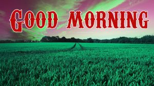 Good Morning Wishes Images Photo Pictures HD for Whatsapp
