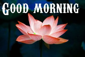 Good Morning Wishes Images Photo Pics for Whatsapp