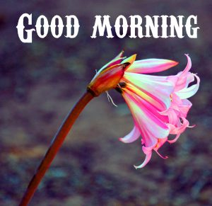 Good Morning Wishes Photo Pics  Images for Whatsapp
