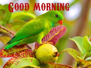 Good Morning Wishes Images Wallpaper Pics for Whatsapp
