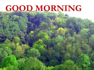 Nature Good Morning Wishes Images Photo Free Download