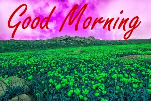 Nature Good Morning Wishes Images Photo Pics