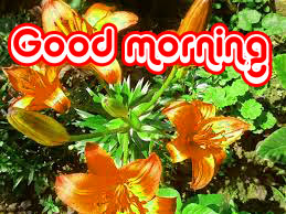 Nice Good Morning Images Photo Download