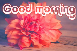 Nice Good Morning Images Photo Pics HD Download With Red Rose