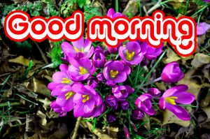 Nice Good Morning Images Photo Pics Free Download