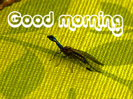 Nice Good Morning Images Wallpaper for Whatsaap