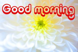Nice Good Morning Images Photo HD Download