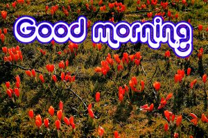Nice Good Morning Images Photo Pics New Download