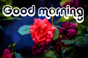 Nice Good Morning Images Photo Pics HD Download