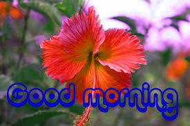Nice Good Morning Images Photo With Flower