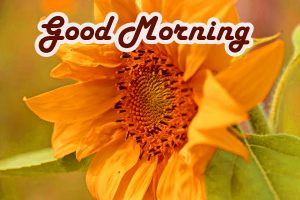 Special Good Morning Images Photo Download In HD With Flower