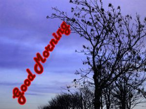 Special Good Morning Wishes Images Photo Pictures Download