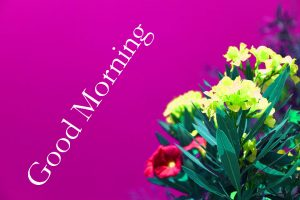 Special Good Morning Wishes Images Wallpaper With Flower