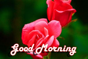 Special Good Morning Wishes Images Pictures With Red Rose
