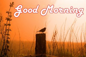 Special Good Morning Wishes Images Pictures Download