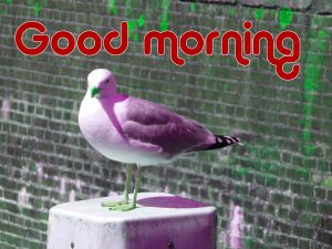 Latest Art Unique Good Morning Images Wallpaper Photo Download