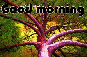 Latest Art Unique Good Morning Images HD Download