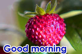 Very Sweet Good Morning Images Pics Download