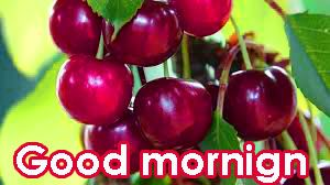 421 Very Sweet Good Morning Images Hd Download